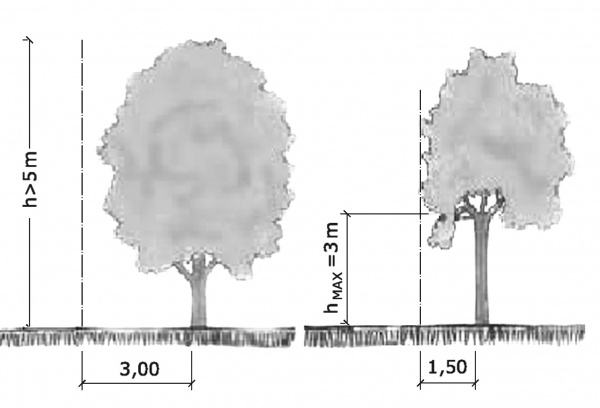La normativa su alberi e distanze dai confini for Distanza siepe dal confine