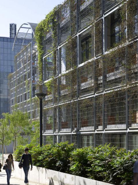 Pareti vegetali verticali una griglia studiata per for Pareti verdi verticali